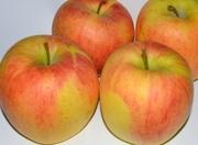 Раннее яблоко из Польши (08_2013 г.)