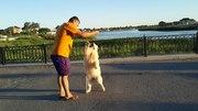 Дрессировка щенков и собак